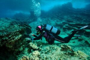 The Med Fund action de conservation Nausicaa